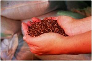 Rooibos bio, thé rouge antioxydant naturel